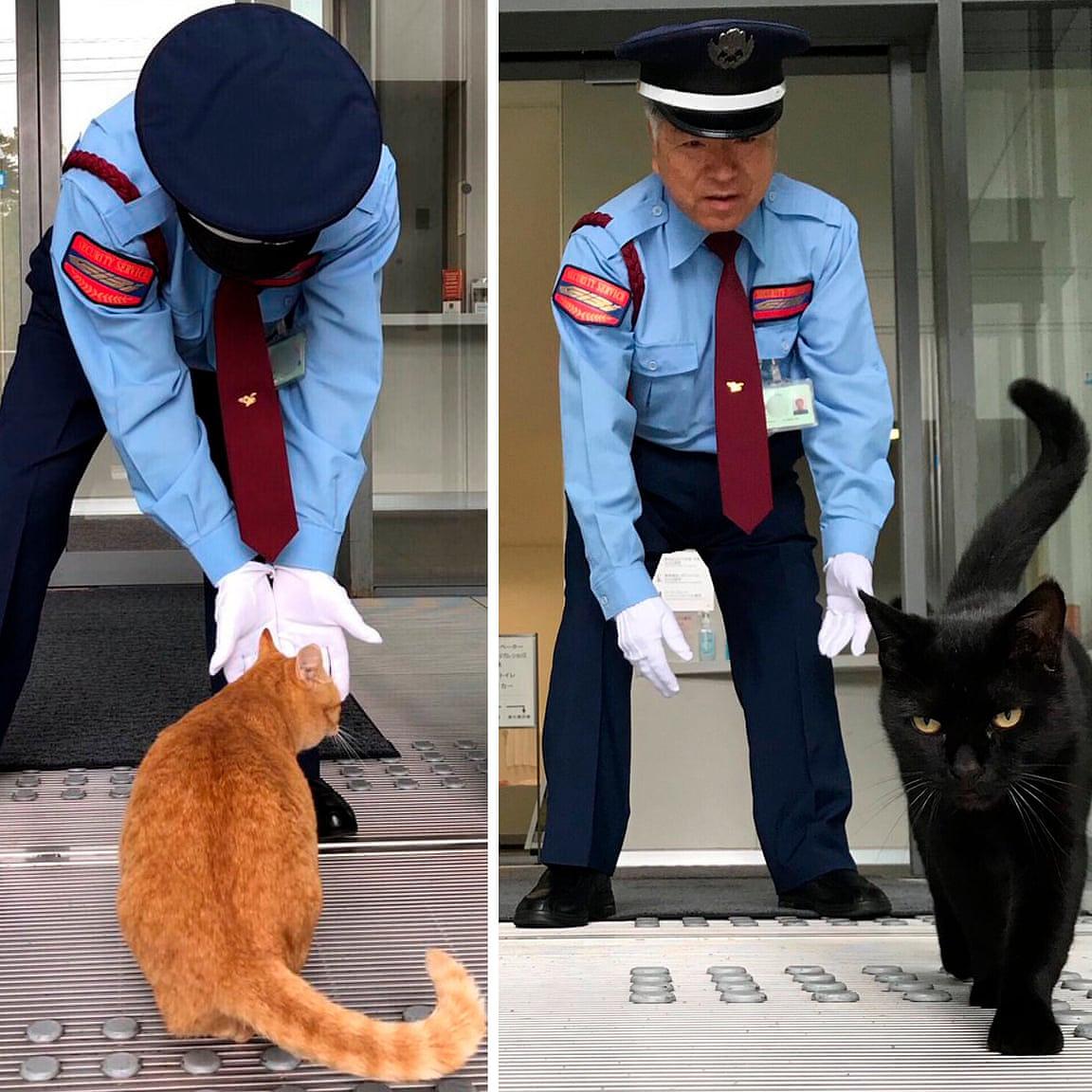 Macskák hozták meg a hírnevet egy japán múzeum számára